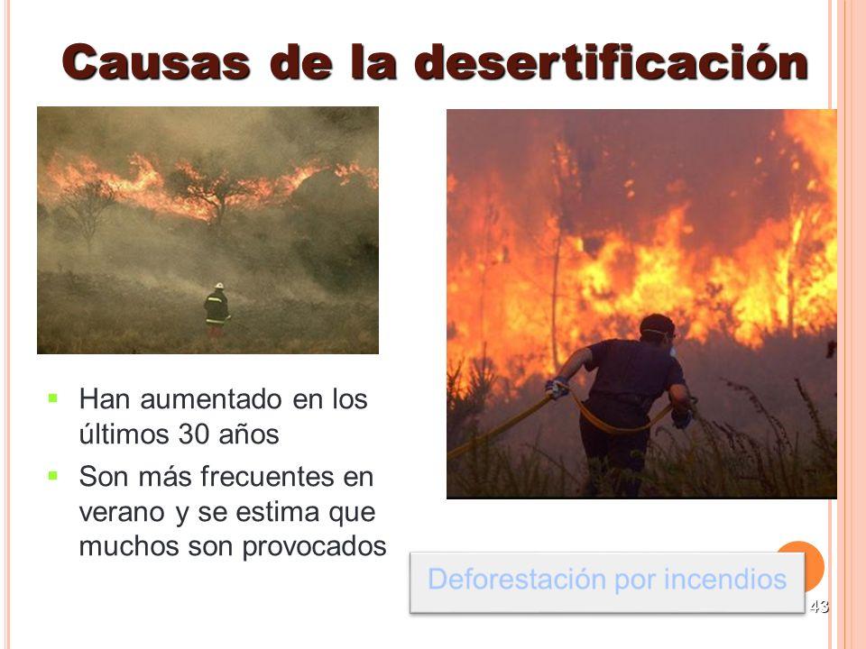 43 Han aumentado en los últimos 30 años Son más frecuentes en verano y se estima que muchos son provocados Causas de la desertificación