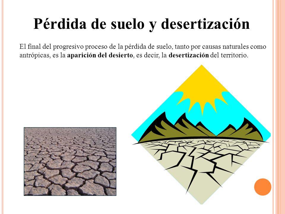 Pérdida de suelo y desertización El final del progresivo proceso de la pérdida de suelo, tanto por causas naturales como antrópicas, es la aparición d