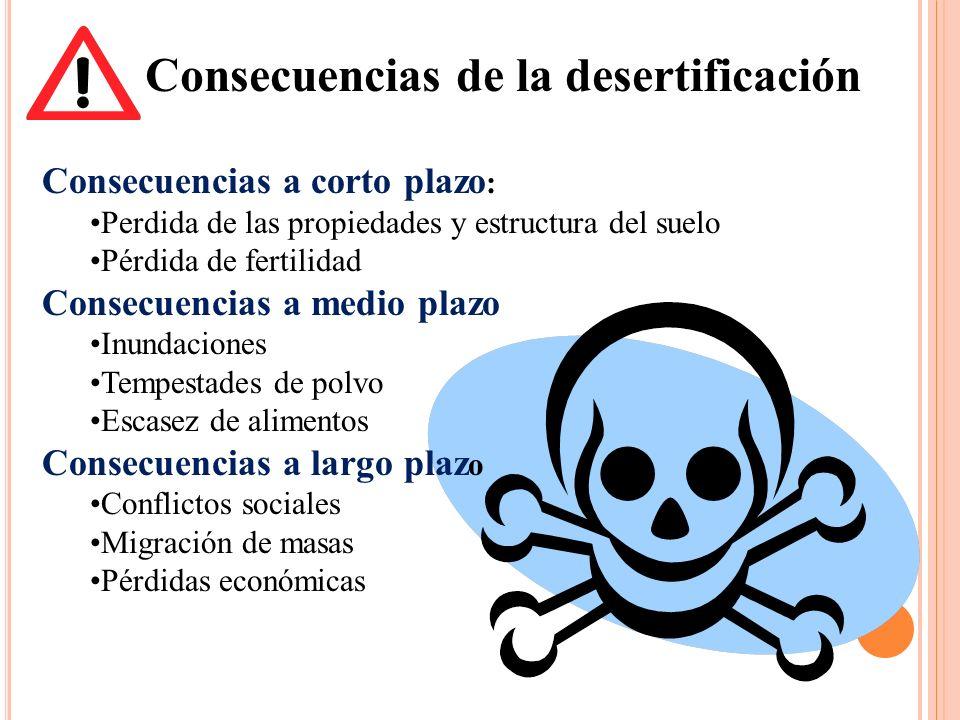 Consecuencias de la desertificación Consecuencias a corto plazo : Perdida de las propiedades y estructura del suelo Pérdida de fertilidad Consecuencia