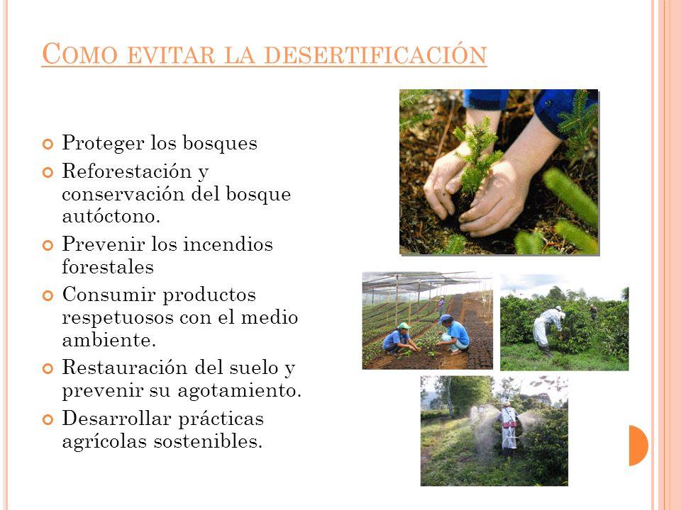 C OMO EVITAR LA DESERTIFICACIÓN Proteger los bosques Reforestación y conservación del bosque autóctono. Prevenir los incendios forestales Consumir pro
