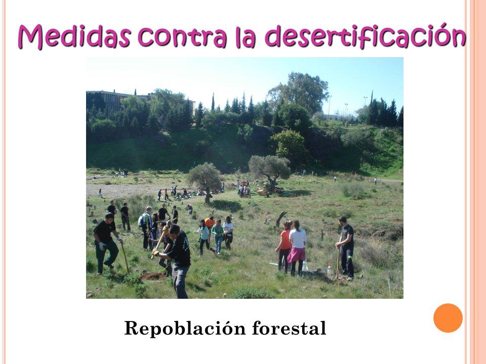 Repoblación forestal