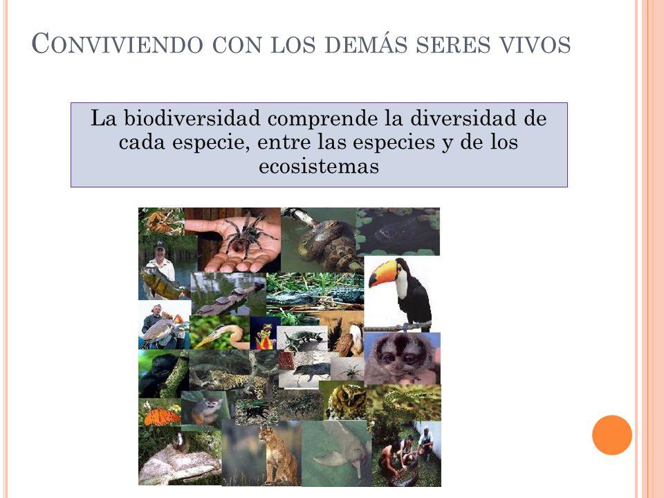 C ONVIVIENDO CON LOS DEMÁS SERES VIVOS La biodiversidad comprende la diversidad de cada especie, entre las especies y de los ecosistemas