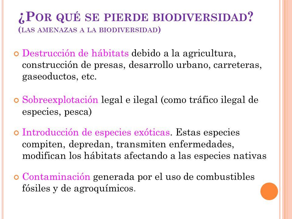 ¿ P OR QUÉ SE PIERDE BIODIVERSIDAD ? ( LAS AMENAZAS A LA BIODIVERSIDAD ) Destrucción de hábitats debido a la agricultura, construcción de presas, desa