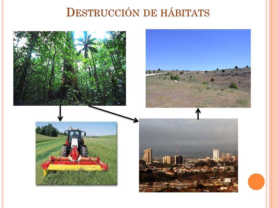 D ESTRUCCIÓN DE HÁBITATS