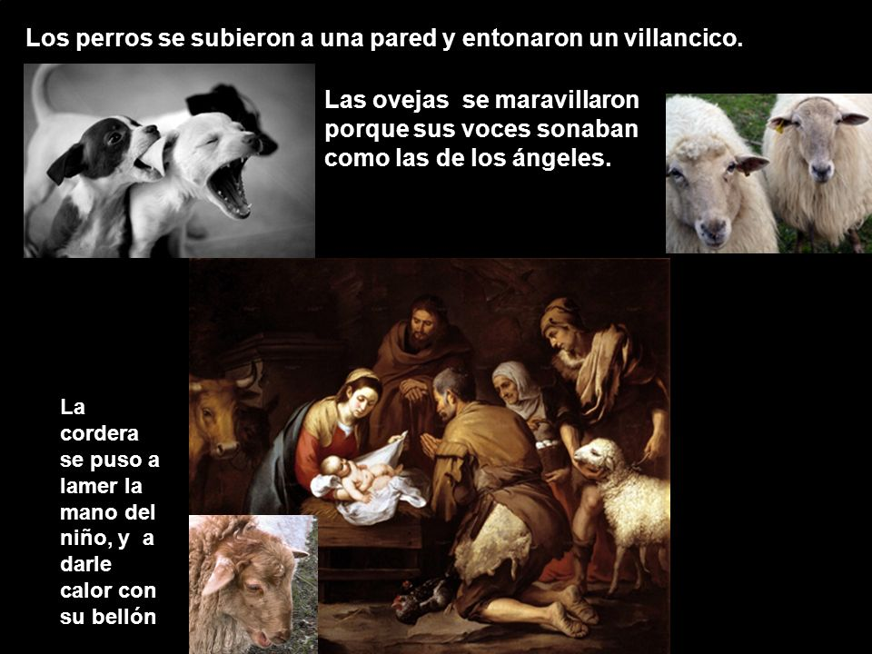 Los perros se subieron a una pared y entonaron un villancico. Las ovejas se maravillaron porque sus voces sonaban como las de los ángeles. La cordera
