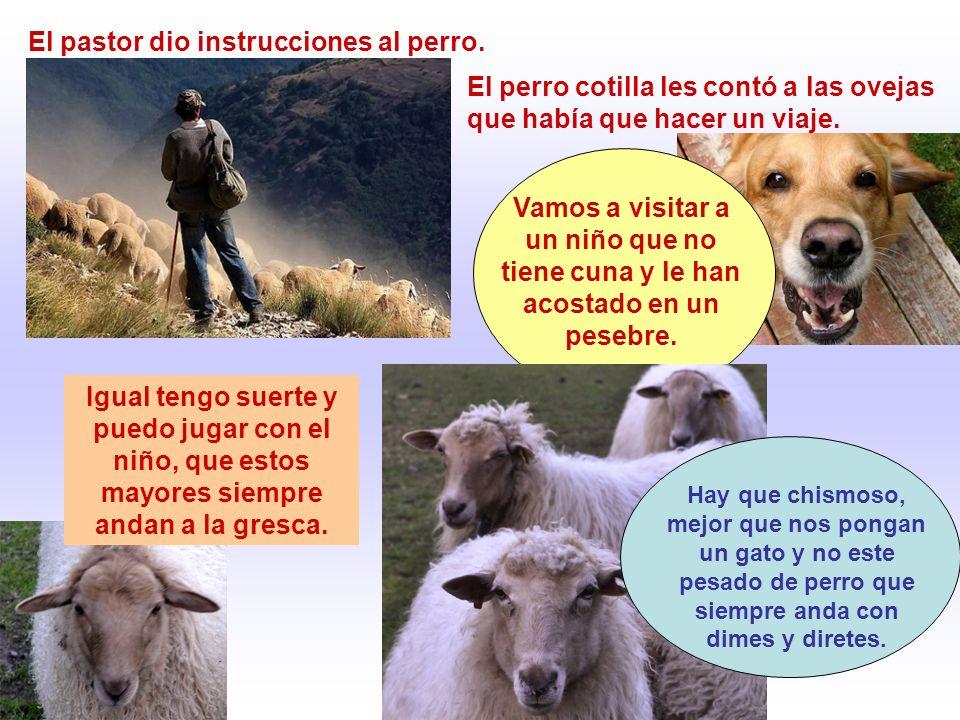 El pastor dio instrucciones al perro. El perro cotilla les contó a las ovejas que había que hacer un viaje. Vamos a visitar a un niño que no tiene cun