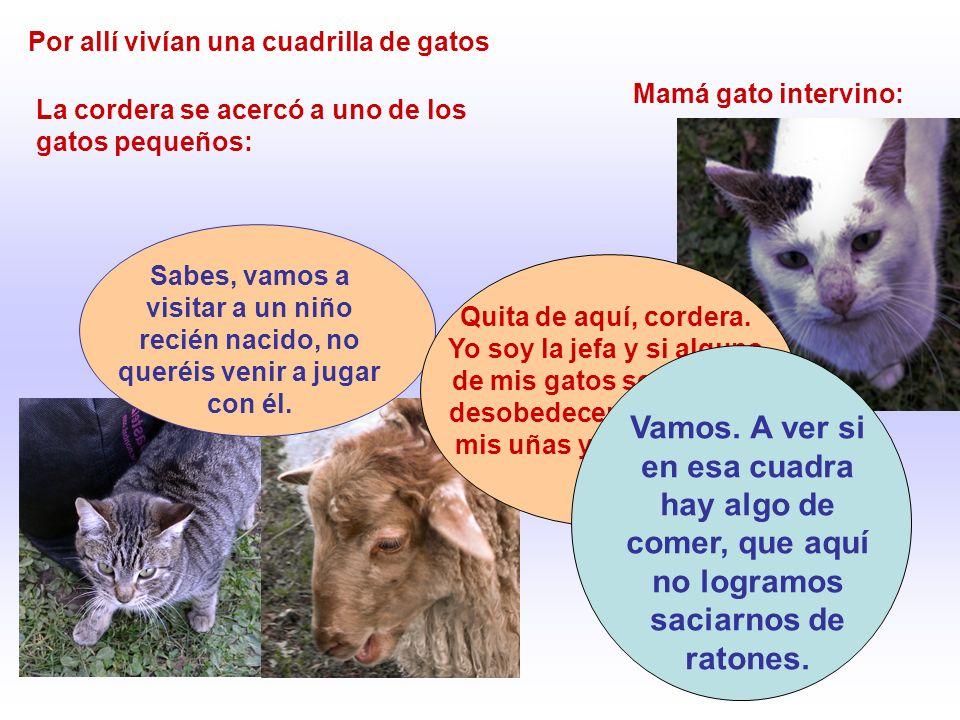 Por allí vivían una cuadrilla de gatos La cordera se acercó a uno de los gatos pequeños: Sabes, vamos a visitar a un niño recién nacido, no queréis ve