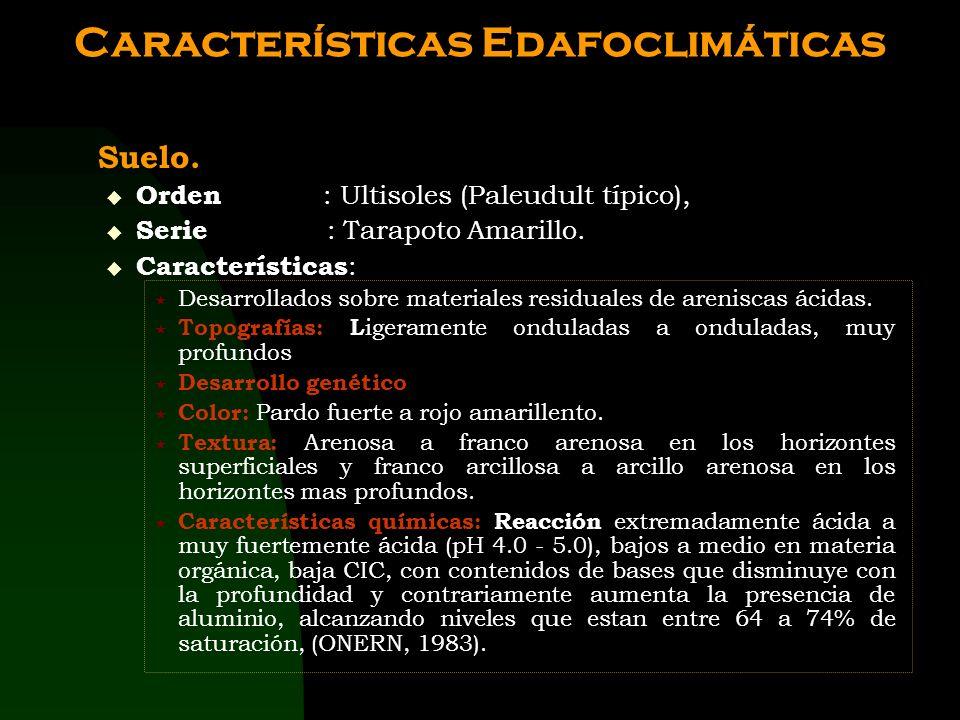 MATERIALES Y MÉTODOS Ubicación del área experimental. Fundo Aucaloma de la UNSM. Caserío Aucaloma Distrito San Roque de Cumbaza Provincia Lamas Depart