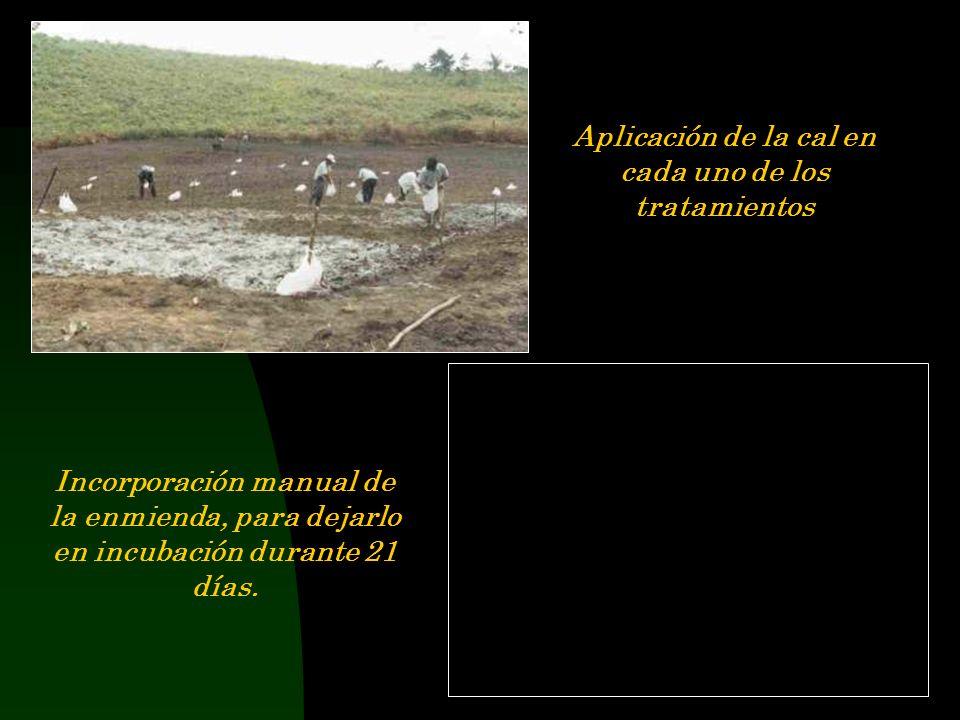 Primera Campaña Preparación del terreno, eliminación manual de lashapumba Mecanización del campo