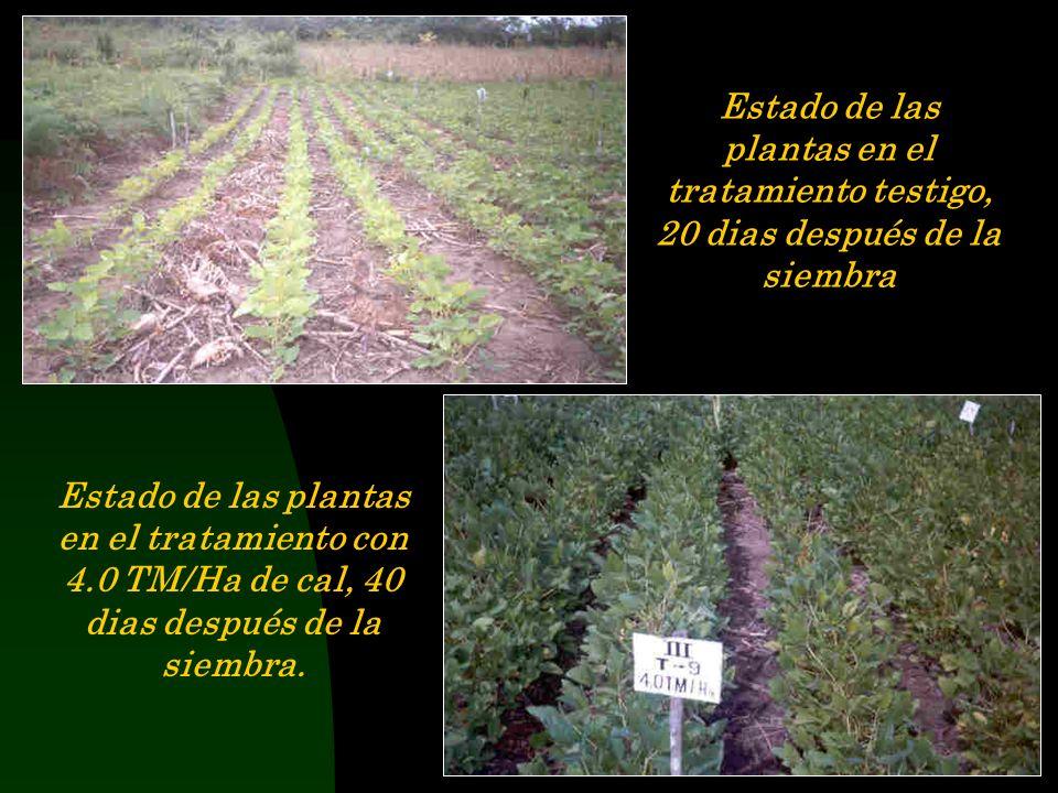 Segunda Campaña Limpieza del campo después de la cosecha del maíz Siembra de Soya (Glycine max Merril), Var. Cristalina, después de inocular la semill