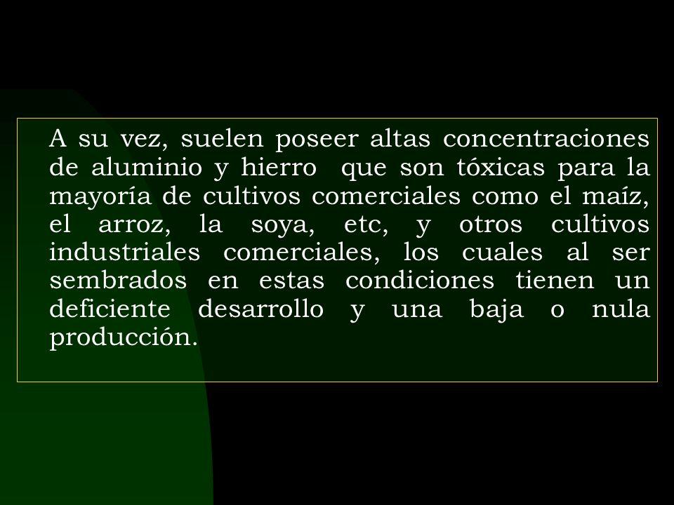 ¡ Gracias Por Su Paciencia ! © 2003 RENGIFO S.A.