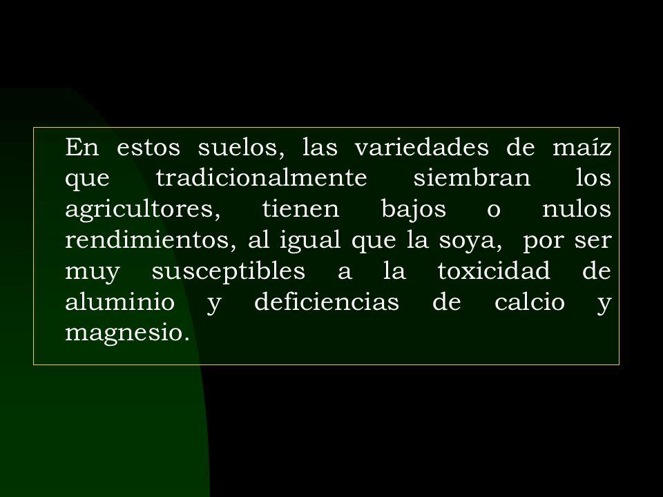 Perfil del suelo Orden : Ultisol (Typic paleudult). Serie : Tarapoto Amarillo.