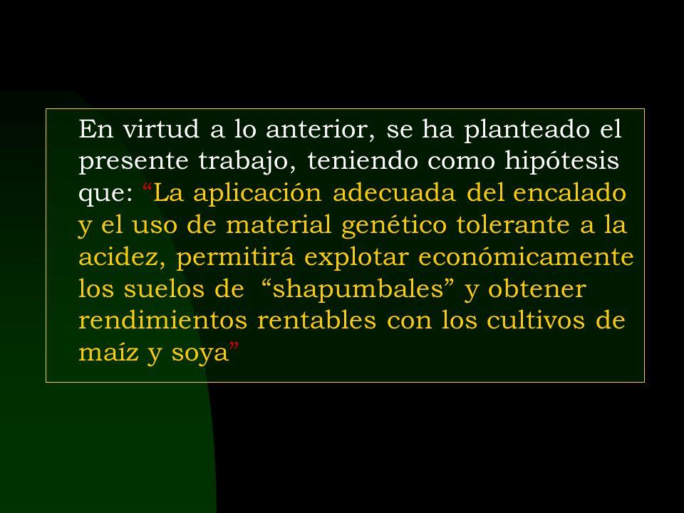 IV. RESULTADOS Y DISCUSION Rendimiento en grano de los cultivos de Maíz y soya