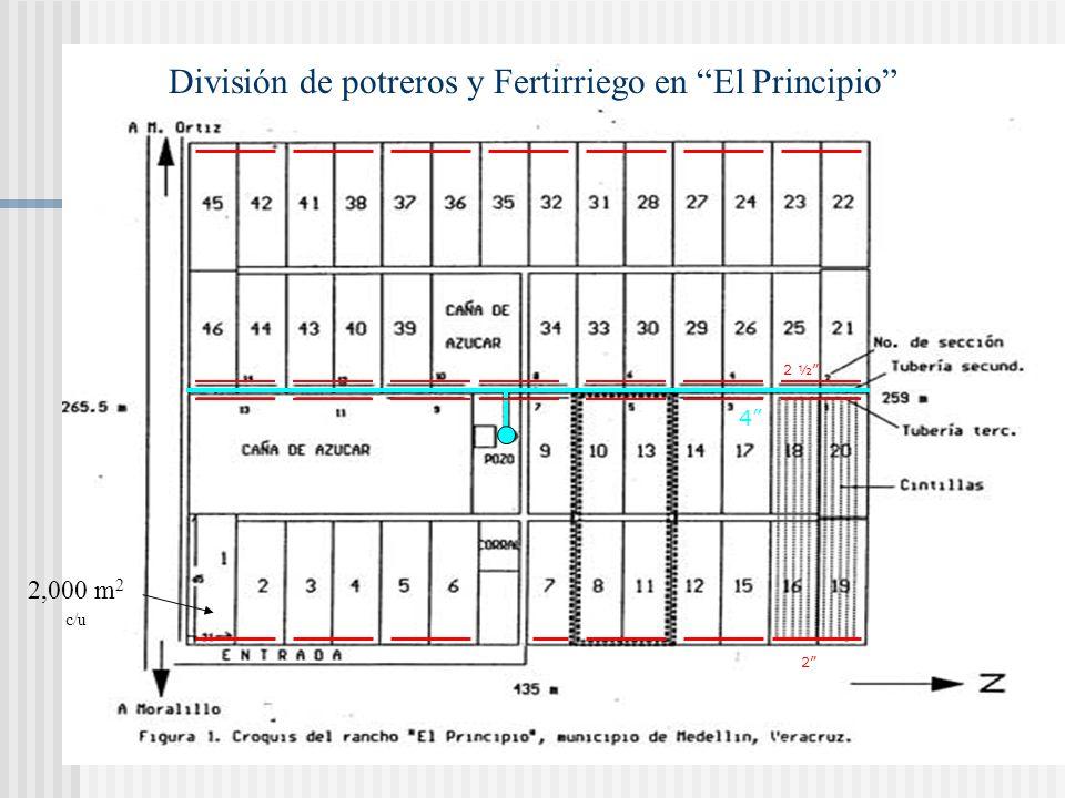 MÉTODO: Cintillas cada 1.5 m y a 30 cm de profundidad. ÁREA: 14 secciones de 0.8 hectáreas PERÍODO DE RIEGO: 2 horas LÁMINA DE RIEGO: 4.5 mm FRECUENCI