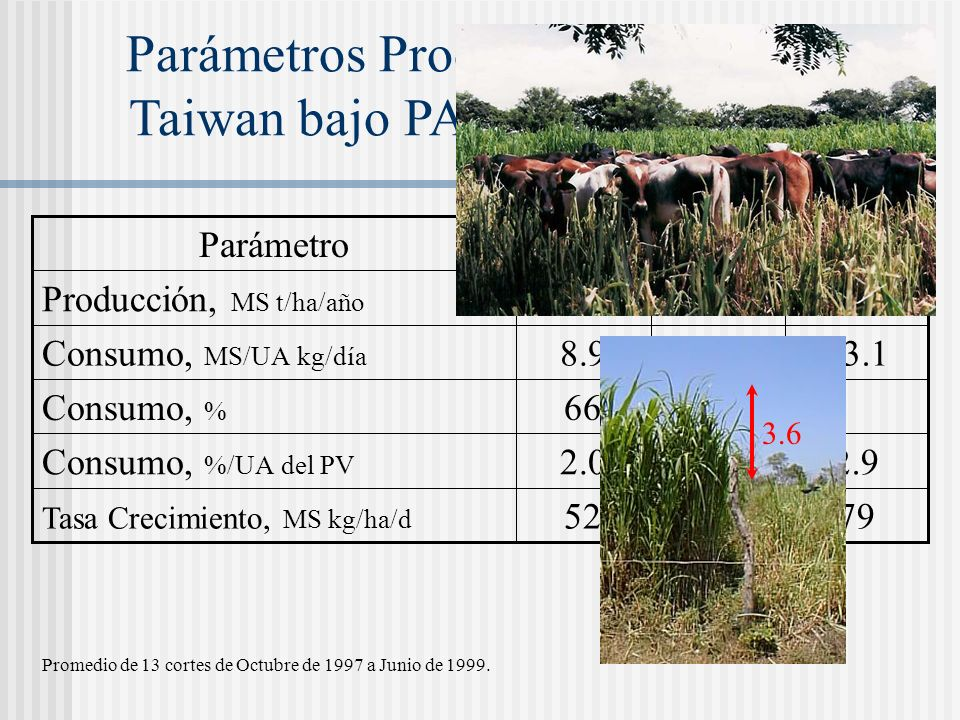 Parámetros Productivos del Pasto Taiwan bajo PARI con fertirriego ParámetroHojaTalloTotal Producción, MS t/ha/año 19.09.828.8 Consumo, MS/UA kg/día 8.