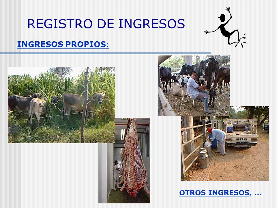 COSTOS o GASTOS COSTO = uso del dinero para producir leche o carne: 1) Fijos: costos independientes del número de animales. 2) Variables: costos que d