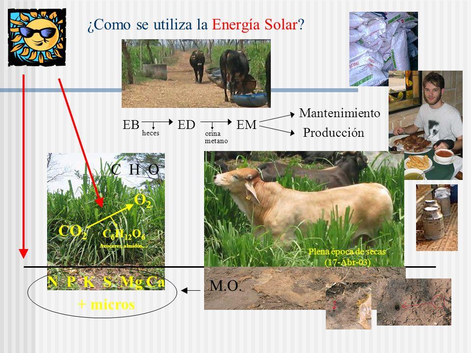 ¿Qué hay que saber? ¿Cómo se utiliza la energía solar? ¿Cómo se produce el forraje? (suelo, minerales, agua,..) Consumo voluntario del animal (calidad