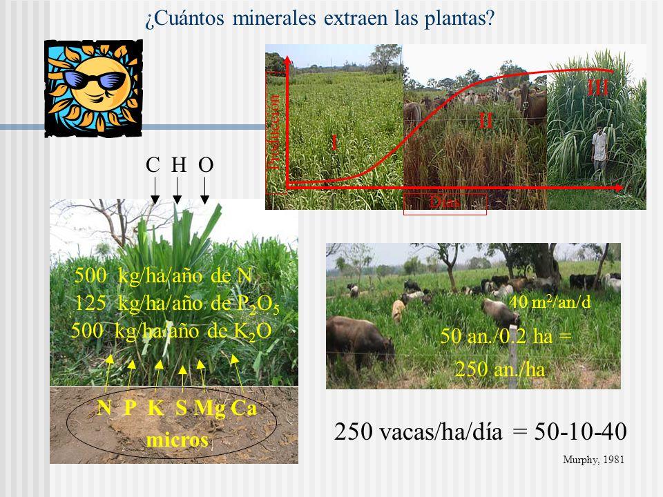 N P K S Mg Ca + micros CO 2 O2O2 C 6 H 12 O 6 Azúcares, almidón,... M.O. ¿Como se utiliza la Energía Solar? C H O EBEDEM Mantenimiento Producción hece