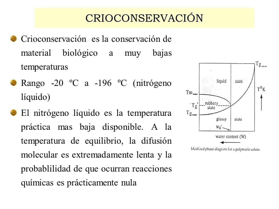 CRIOCONSERVACIÓN Crioconservación es la conservación de material biológico a muy bajas temperaturas Rango -20 ºC a -196 ºC (nitrógeno líquido) El nitr