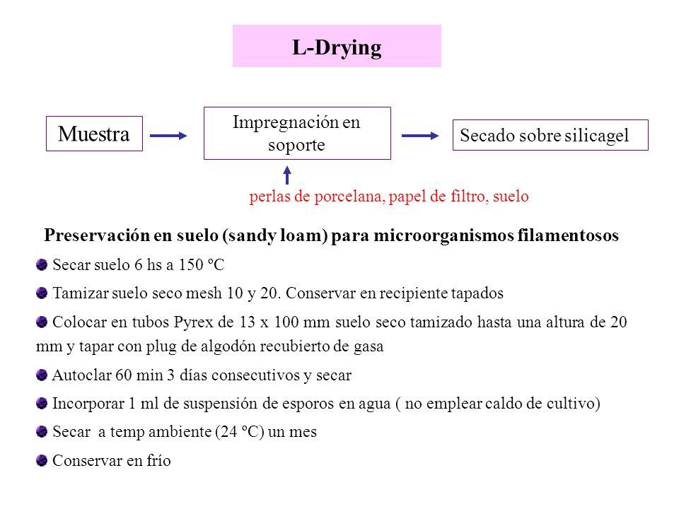 L-Drying Preservación en suelo (sandy loam) para microorganismos filamentosos Secar suelo 6 hs a 150 ºC Tamizar suelo seco mesh 10 y 20. Conservar en