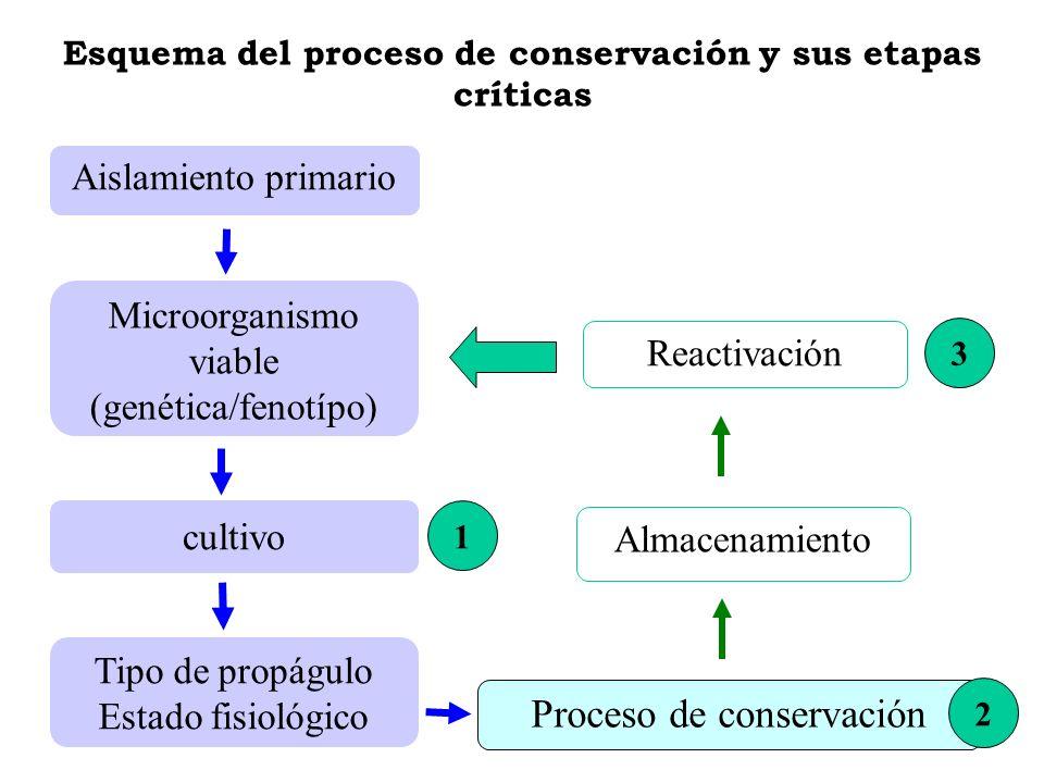 Esquema del proceso de conservación y sus etapas críticas Aislamiento primario Microorganismo viable (genética/fenotípo) Tipo de propágulo Estado fisi