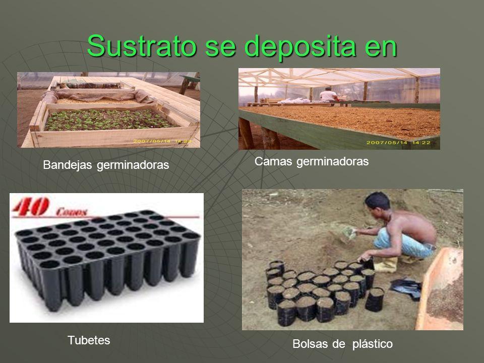 Sustrato se deposita en Bandejas germinadoras Camas germinadoras Tubetes Bolsas de plástico