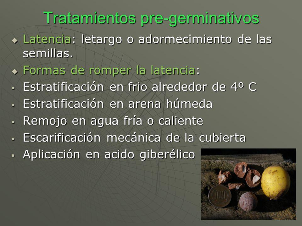 Tratamientos pre-germinativos Latencia: letargo o adormecimiento de las semillas. Latencia: letargo o adormecimiento de las semillas. Formas de romper