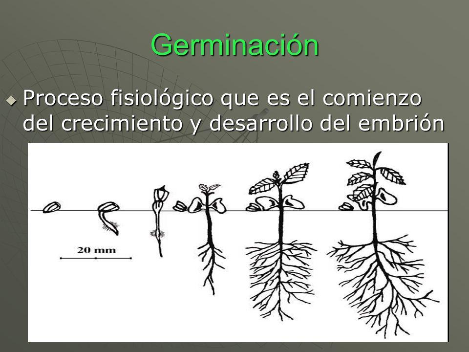 Germinación Proceso fisiológico que es el comienzo del crecimiento y desarrollo del embrión Proceso fisiológico que es el comienzo del crecimiento y d