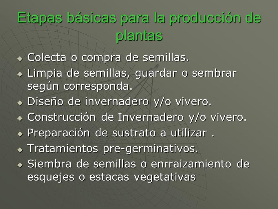 Etapas básicas para la producción de plantas Colecta o compra de semillas. Colecta o compra de semillas. Limpia de semillas, guardar o sembrar según c