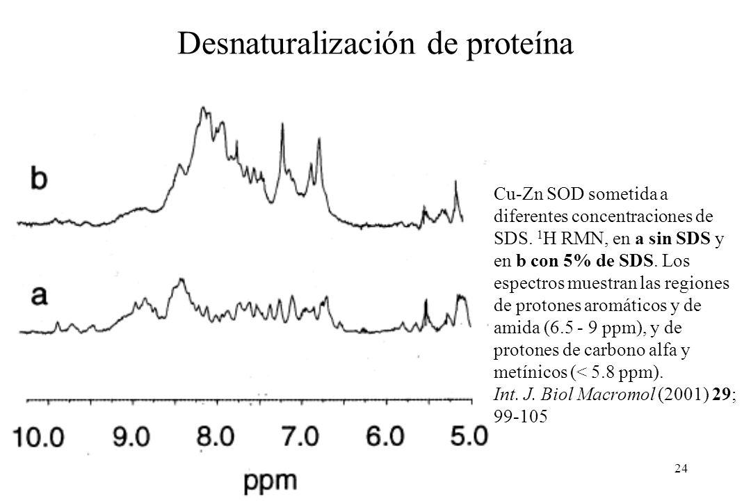 24 Cu-Zn SOD sometida a diferentes concentraciones de SDS.