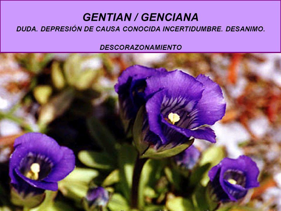 GENTIAN / GENCIANA DUDA. DEPRESIÓN DE CAUSA CONOCIDA INCERTIDUMBRE. DESANIMO. DESCORAZONAMIENTO