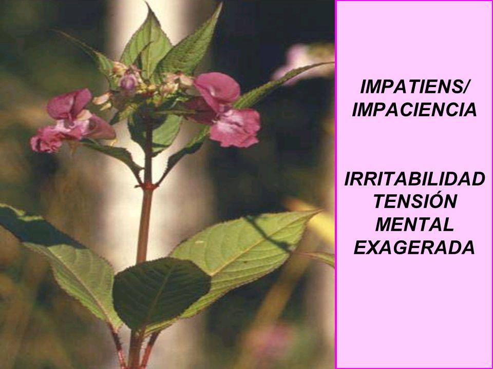 IMPATIENS/ IMPACIENCIA IRRITABILIDAD TENSIÓN MENTAL EXAGERADA
