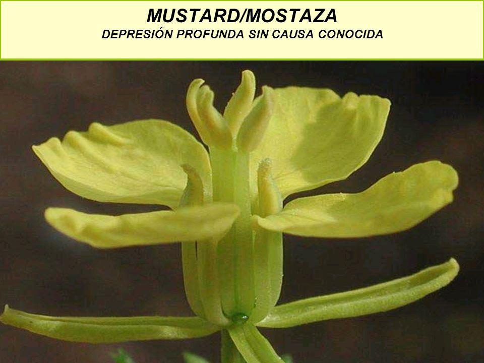 MUSTARD/MOSTAZA DEPRESIÓN PROFUNDA SIN CAUSA CONOCIDA