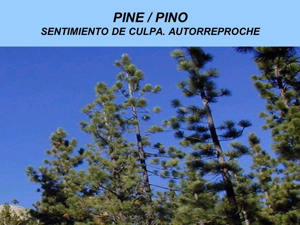 PINE / PINO SENTIMIENTO DE CULPA. AUTORREPROCHE