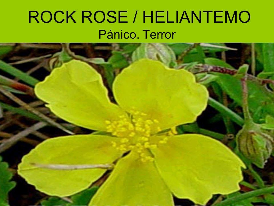 ROCK ROSE / HELIANTEMO Pánico. Terror
