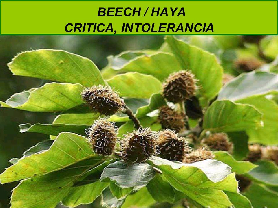 BEECH / HAYA CRITICA, INTOLERANCIA