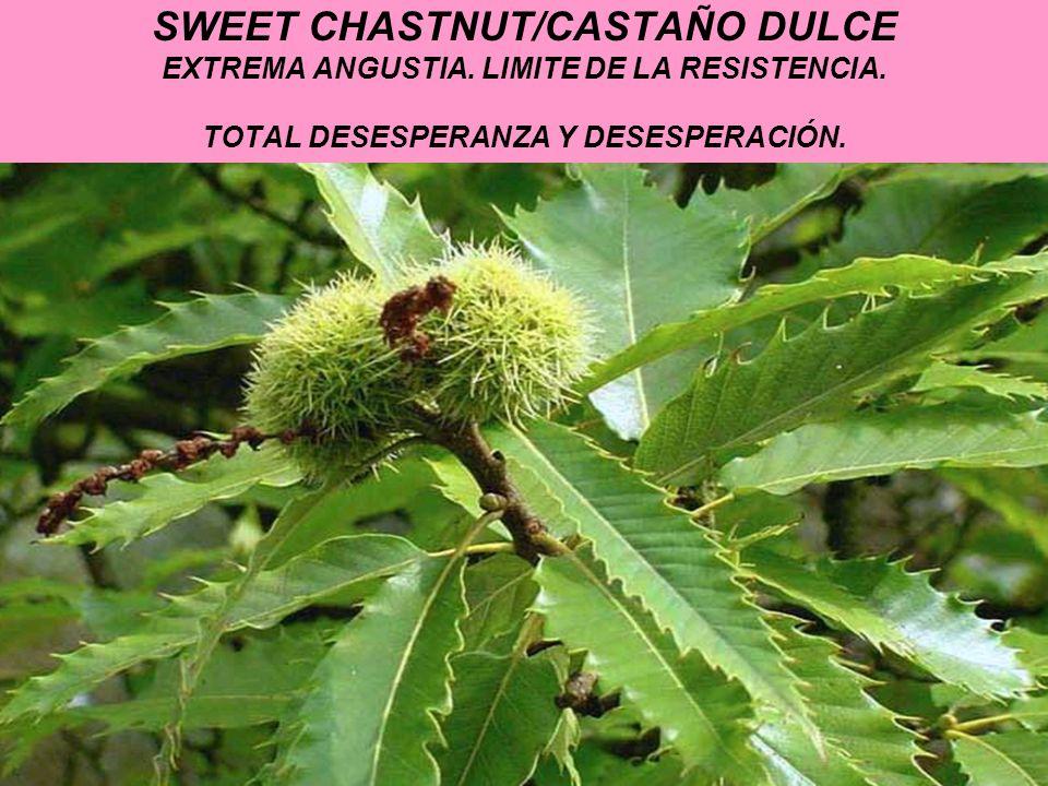 SWEET CHASTNUT/CASTAÑO DULCE EXTREMA ANGUSTIA. LIMITE DE LA RESISTENCIA. TOTAL DESESPERANZA Y DESESPERACIÓN.