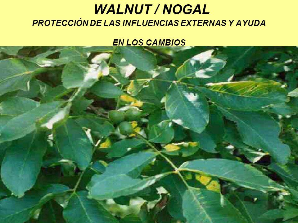WALNUT / NOGAL PROTECCIÓN DE LAS INFLUENCIAS EXTERNAS Y AYUDA EN LOS CAMBIOS