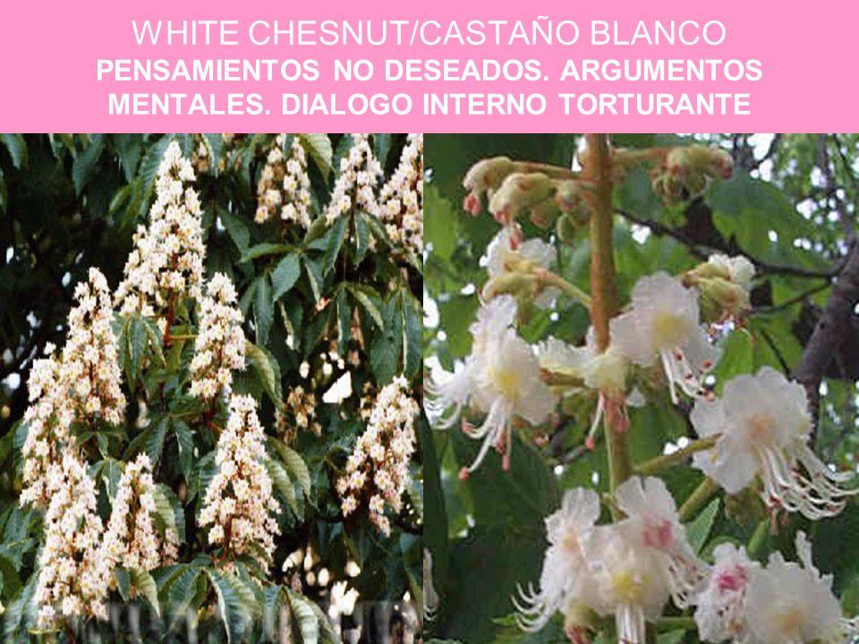 WHITE CHESNUT/CASTAÑO BLANCO PENSAMIENTOS NO DESEADOS. ARGUMENTOS MENTALES. DIALOGO INTERNO TORTURANTE