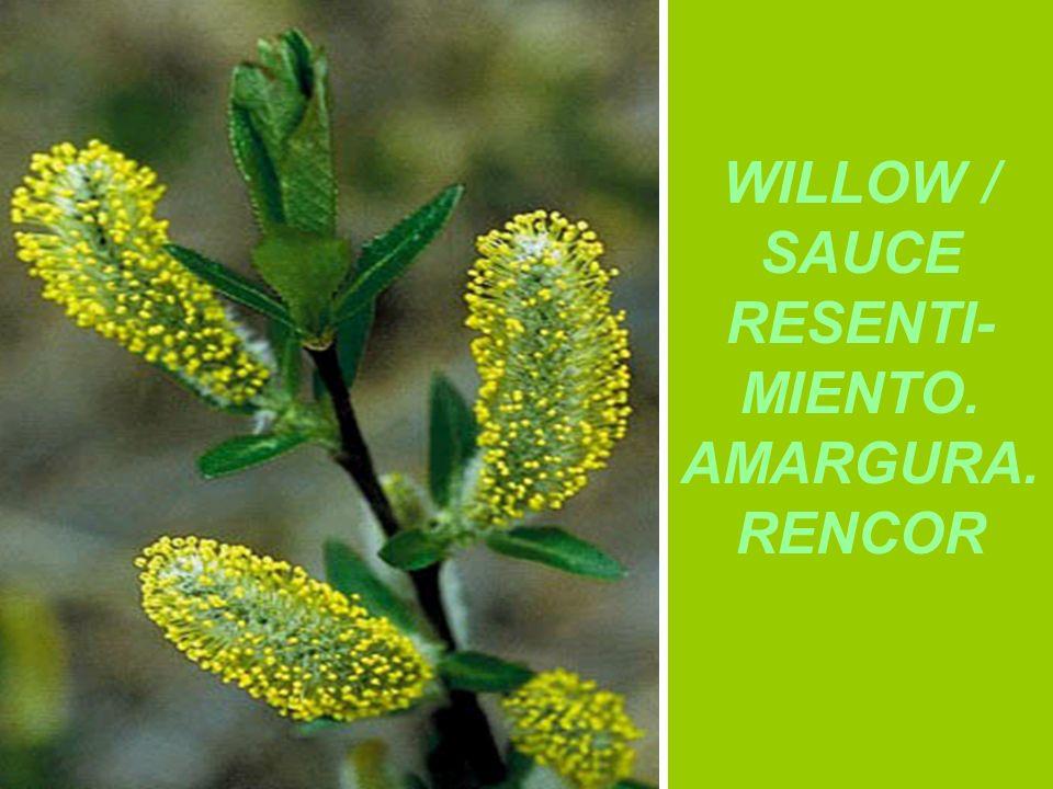WILLOW / SAUCE RESENTI- MIENTO. AMARGURA. RENCOR
