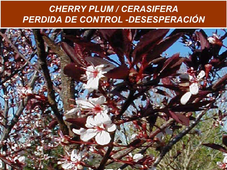 CHERRY PLUM / CERASIFERA PERDIDA DE CONTROL -DESESPERACIÓN