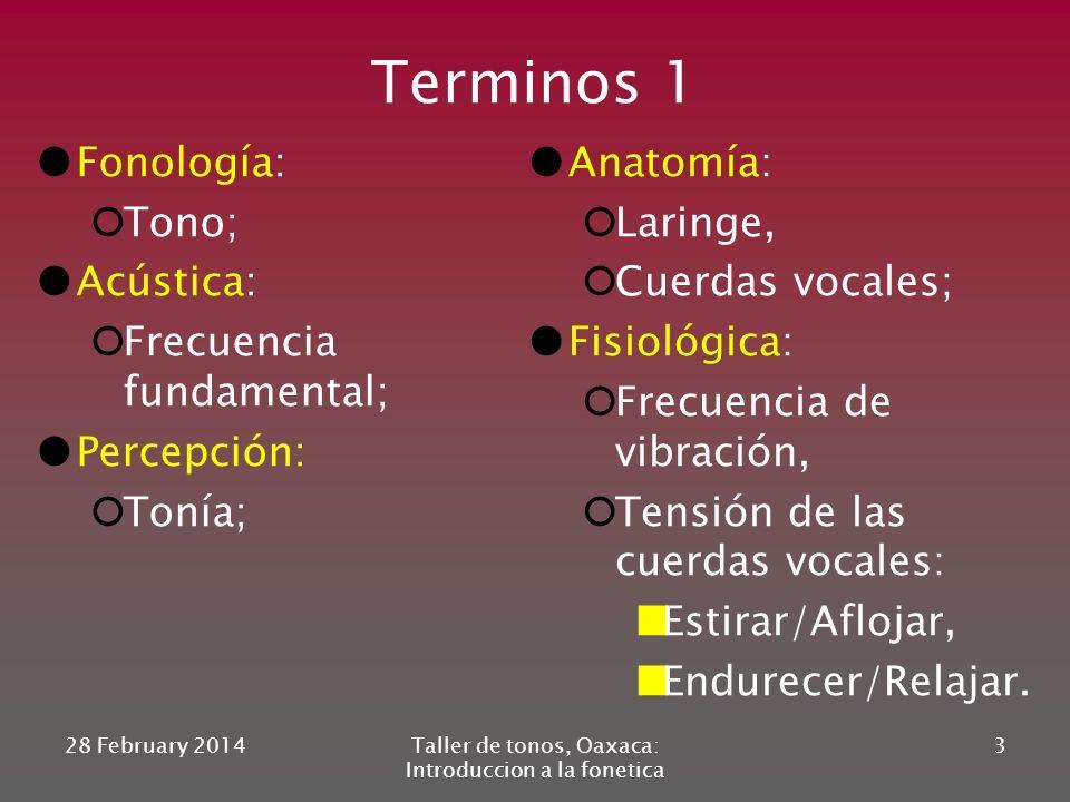 Terminos 1 Fonología: Tono; Acústica: Frecuencia fundamental; Percepción: Tonía; Anatomía: Laringe, Cuerdas vocales; Fisiológica: Frecuencia de vibración, Tensión de las cuerdas vocales: Estirar/Aflojar, Endurecer/Relajar.