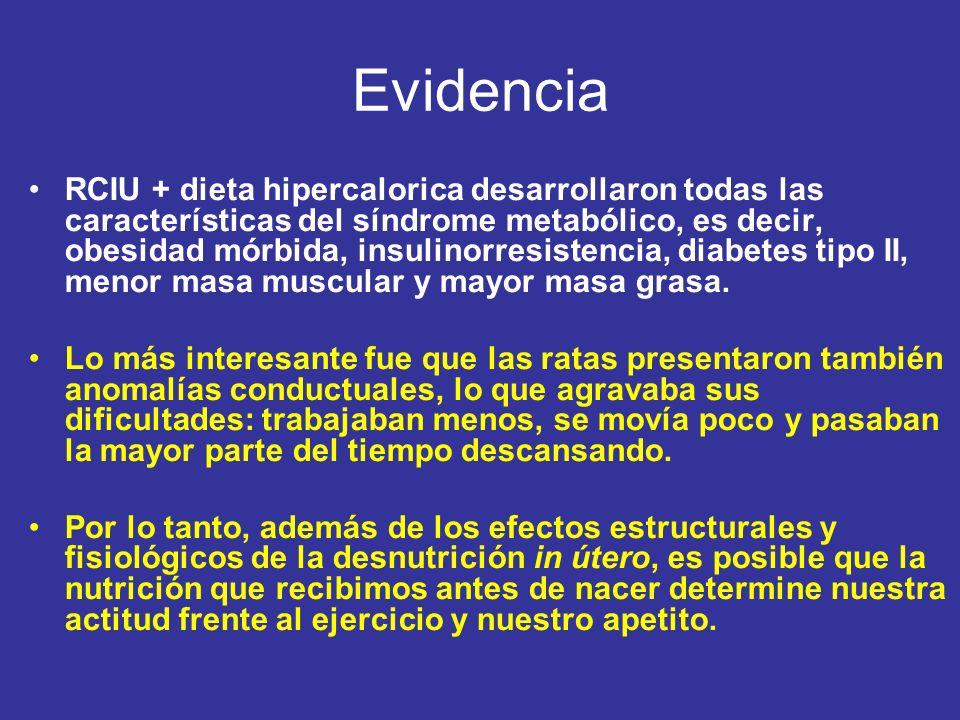 RCIU + dieta hipercalorica desarrollaron todas las características del síndrome metabólico, es decir, obesidad mórbida, insulinorresistencia, diabetes tipo II, menor masa muscular y mayor masa grasa.