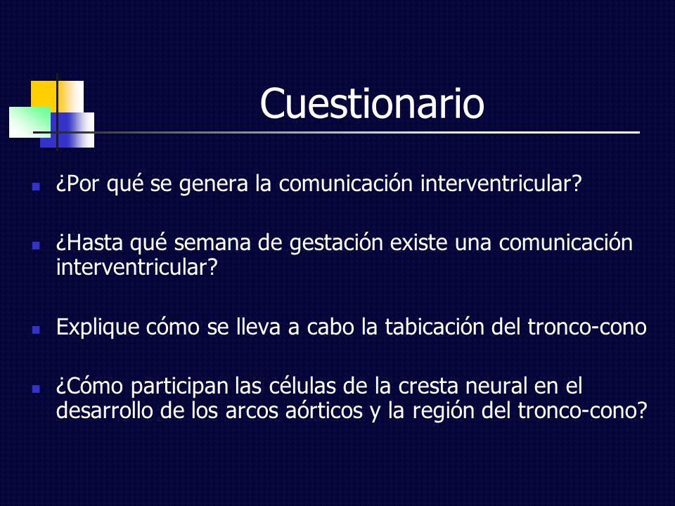 Cuestionario ¿Por qué se genera la comunicación interventricular? ¿Hasta qué semana de gestación existe una comunicación interventricular? Explique có