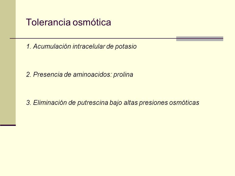 Tolerancia osmótica 1. Acumulación intracelular de potasio 2. Presencia de aminoacidos: prolina 3. Eliminación de putrescina bajo altas presiones osmó