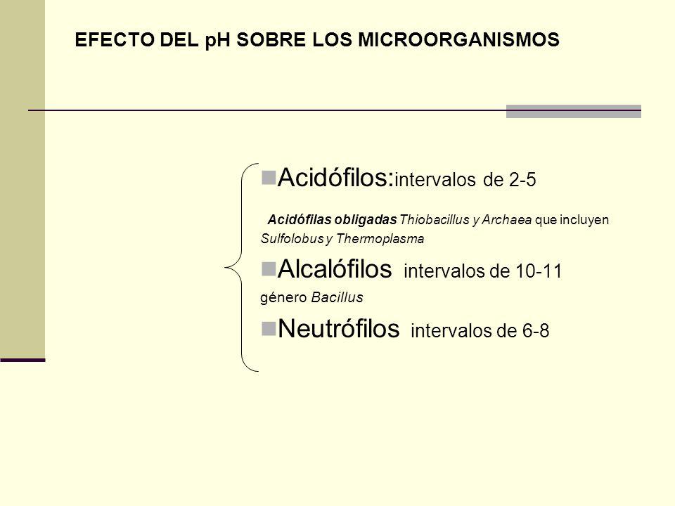 EFECTO DEL pH SOBRE LOS MICROORGANISMOS Acidófilos: intervalos de 2-5 Acidófilas obligadas Thiobacillus y Archaea que incluyen Sulfolobus y Thermoplas