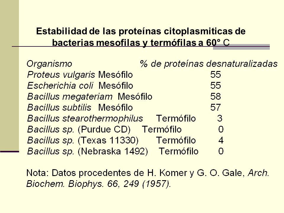 Estabilidad de las proteínas citoplasmiticas de bacterias mesofilas y termófilas a 60° C