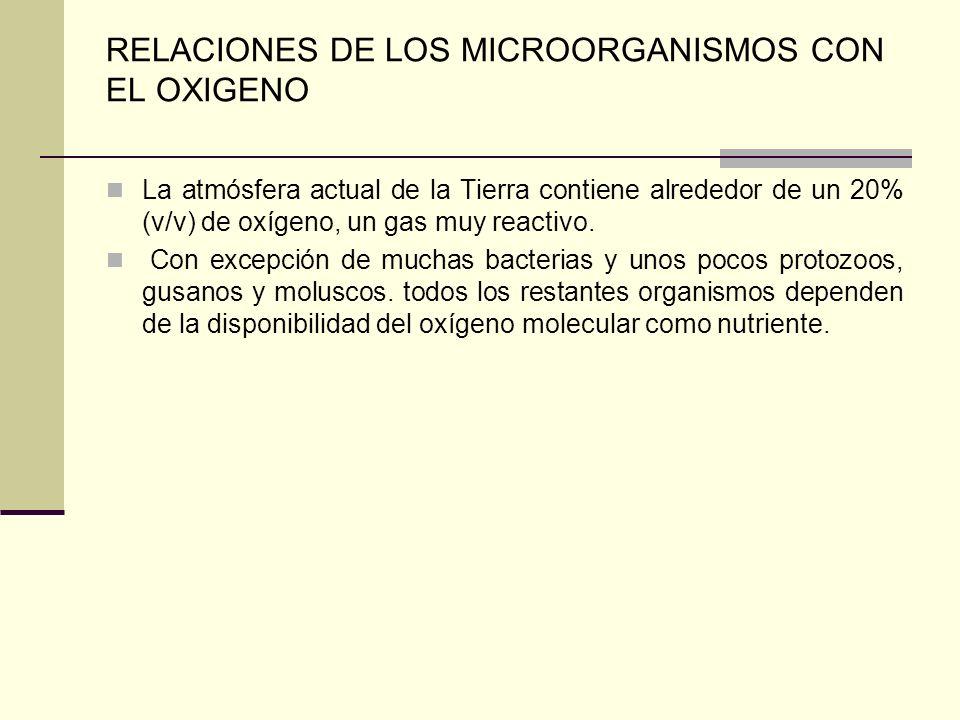 RELACIONES DE LOS MICROORGANISMOS CON EL OXIGENO La atmósfera actual de la Tierra contiene alrededor de un 20% (v/v) de oxígeno, un gas muy reactivo.