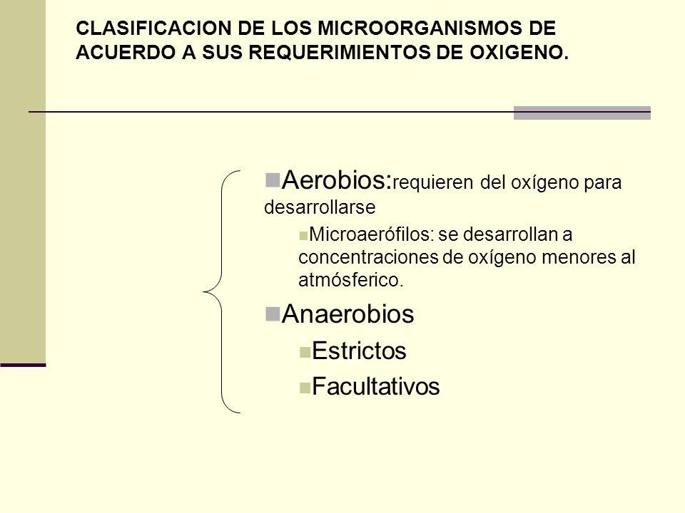 CLASIFICACION DE LOS MICROORGANISMOS DE ACUERDO A SUS REQUERIMIENTOS DE OXIGENO. Aerobios: requieren del oxígeno para desarrollarse Microaerófilos: se