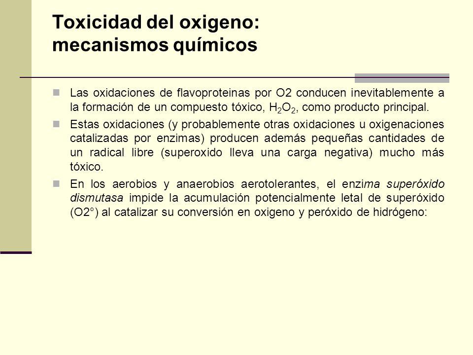 Toxicidad del oxigeno: mecanismos químicos Las oxidaciones de flavoproteinas por O2 conducen inevitablemente a la formación de un compuesto tóxico, H